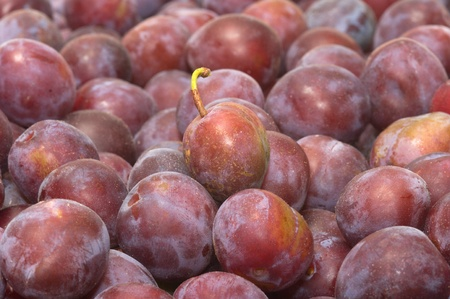 Background from ripe plums. Stock Photo - 10574070