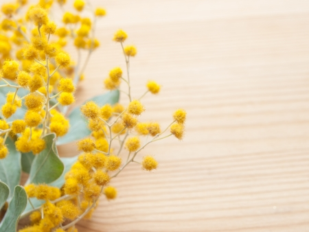 Closeup of mimosa flowers on wooden background Stock Photo