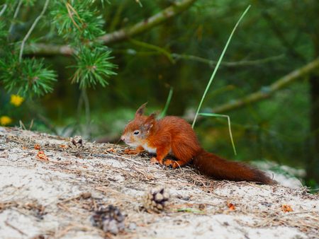 canny: tricky look cute squirrel on natural forest backfround