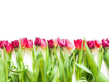 row on pink rose and purple tulips Stock Photo