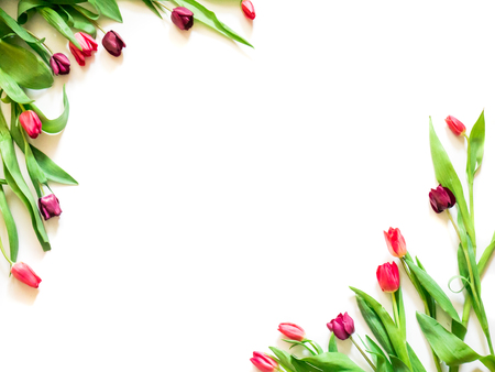 present card with tulip flowers corners template Stock Photo
