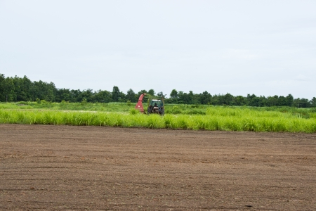 rice cultivation  Stock Photo - 14338564