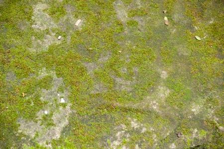 liquen: Liquen sobre una piedra Foto de archivo