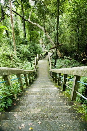 old stairs in forest  Stock Photo - 14910024