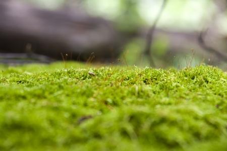 moss on stone  Imagens