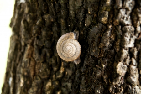 Snail is climbing on the tree with nature background
