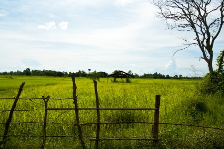 Thai Farm  photo