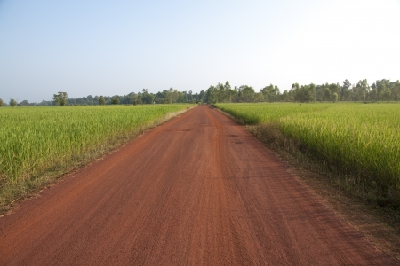 Rural gravel road between agricultural fields  Natural background landscape