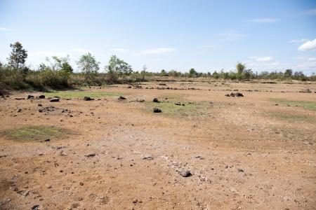 heathland: Steppe landscape - golden dry grass in the desert valley  Sun-scorched heathland in summer - nature background