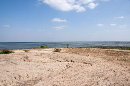 landscape of a marsh Stock Photo - 17454492