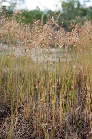 Clump of grass photo