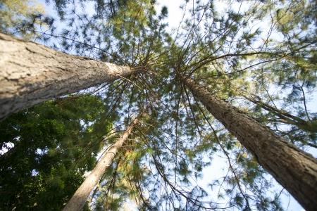 Treetop Stock Photo