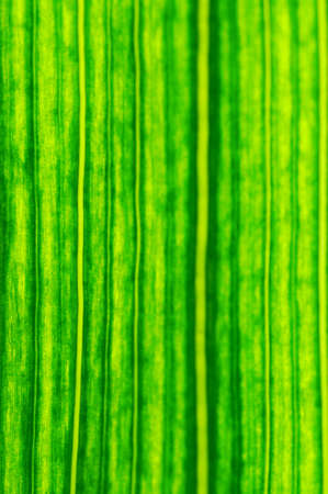 Green leaf at high magnification with a clear structure
