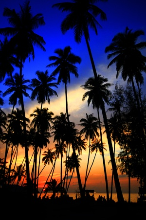 palm tree fruit: Coconut palms on sand beach in tropic on sunset Thailand