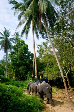 Trip on elephants on jungle on Koh Samui in Thailand