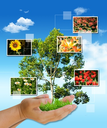 tree in hand as a gift with flower frame Stock Photo - 10341487