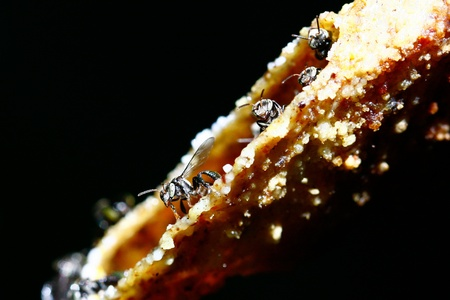 ladyfly: Insects in the forest at Koh Samui, Thailand