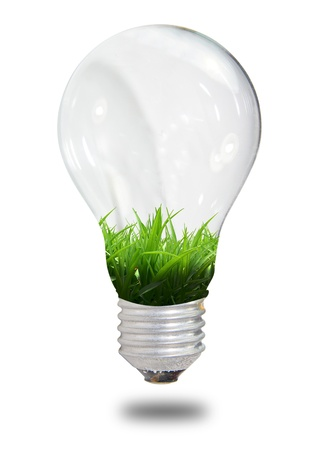 glowing light bulb: light bulb with grass only