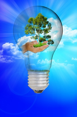 blue sky thinking: light bulb with protect nature on blue sky day