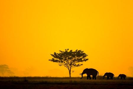 siluetas de elefantes: Grupo de elefantes en Tailandia