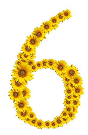 Number 6, Sunflower isolate on White background Stock Photo