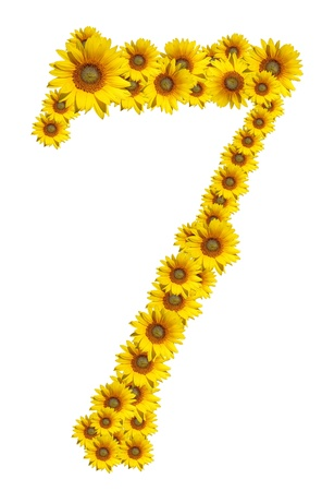 Number 7, Sunflower isolate on White background photo