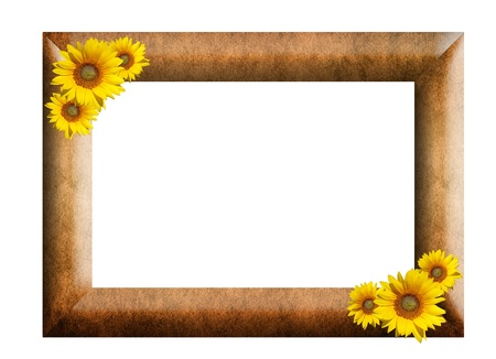 Vintage picture frame, wood plated and sunflower on white background photo