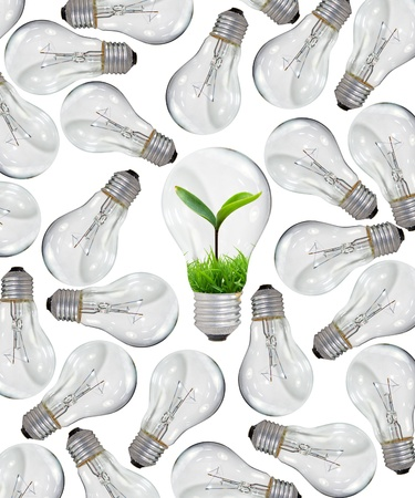 flower power: too many light bulbs on white background and young tree inside Stock Photo