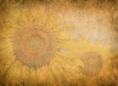 crosshatching: sunflower on old paper for your design