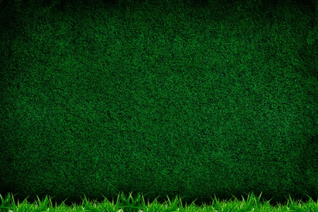 Turf background with grass forground, texture for your design photo