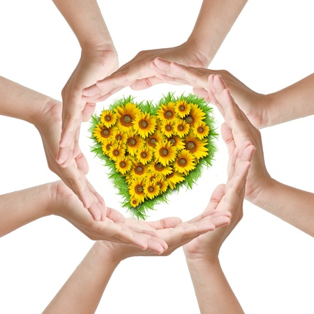 Multiracial woman hand around heart sunflower photo