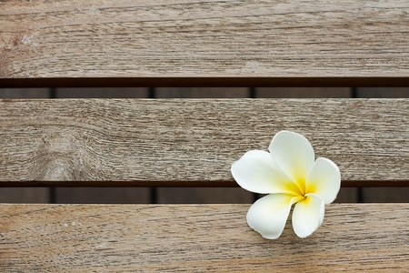 White Flower on Wood Pattern Stock Photo - 11212890