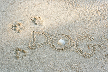 Dog footprints on sand with shell, near the beach photo