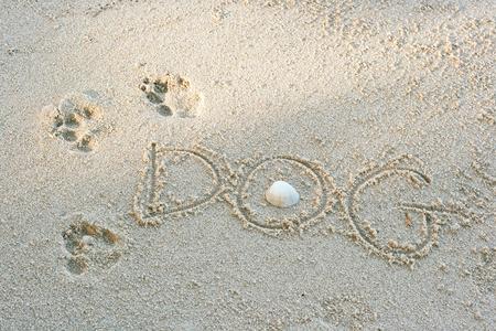 Dog footprints on sand with shell, near the beach