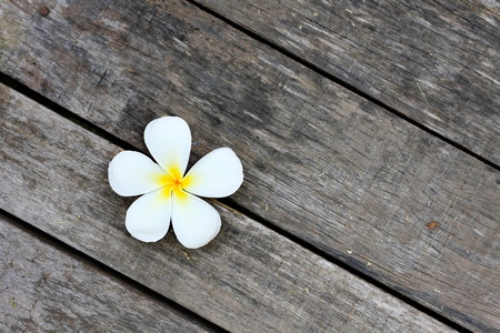 frangipani: White Flower on Wood Pattern