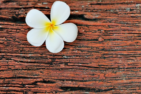 White Flower on Wood Pattern photo