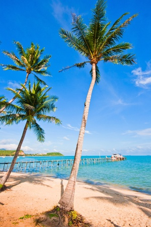 coconut on the beach and pier transfer to island Stock Photo - 11578711