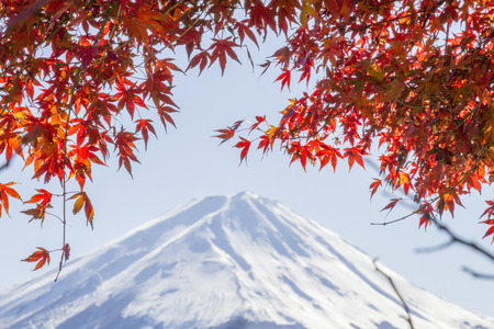 CLOSE UP Autumn leaves and blur background Fuji mountain photo