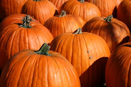 This is an image of Large pumpkins photo