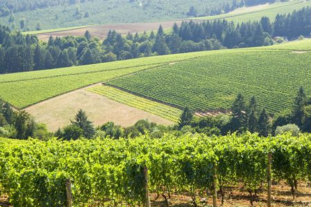 this is Vineyard patterns in the dundee hills