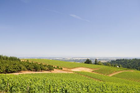 This is Rolling Hills from Dundee Hill Oregon wine country