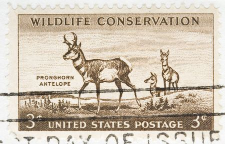 wildlife conservation: this is Vintage 1956 US Postage Stamp Wildlife Conservation Pronghorn antelope Stock Photo