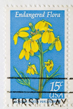 wallflower: This is a Postage Stamp endangered flora contra costa wallflower Stock Photo