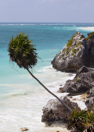 Palm Tree over beach at Tulum Mexico