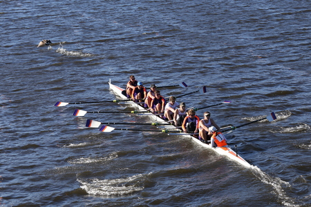 goose club: BOSTON - OCTOBER 22, 2016: Hobart Colelge races in the Head of Charles Regatta Mens College Eights [PUBLIC RACE]