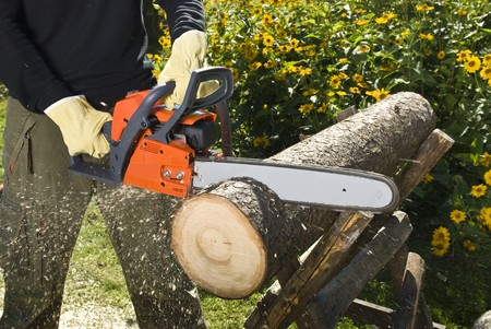 The chainsaw cutting the log of wood