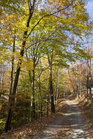Autumn forest in West Virginia Stock Photo - 8182660