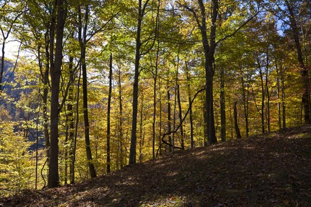 Autumn forest in West Virginia Stock Photo - 8182671