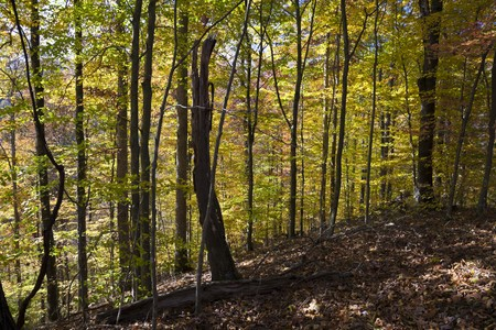 Autumn forest in West Virginia Stock Photo - 8182689