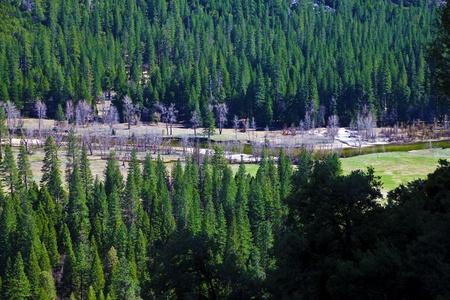 Yosemite national park in California photo
